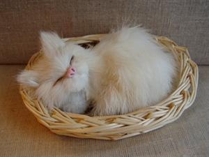 Billede af Sovende kat i kurv